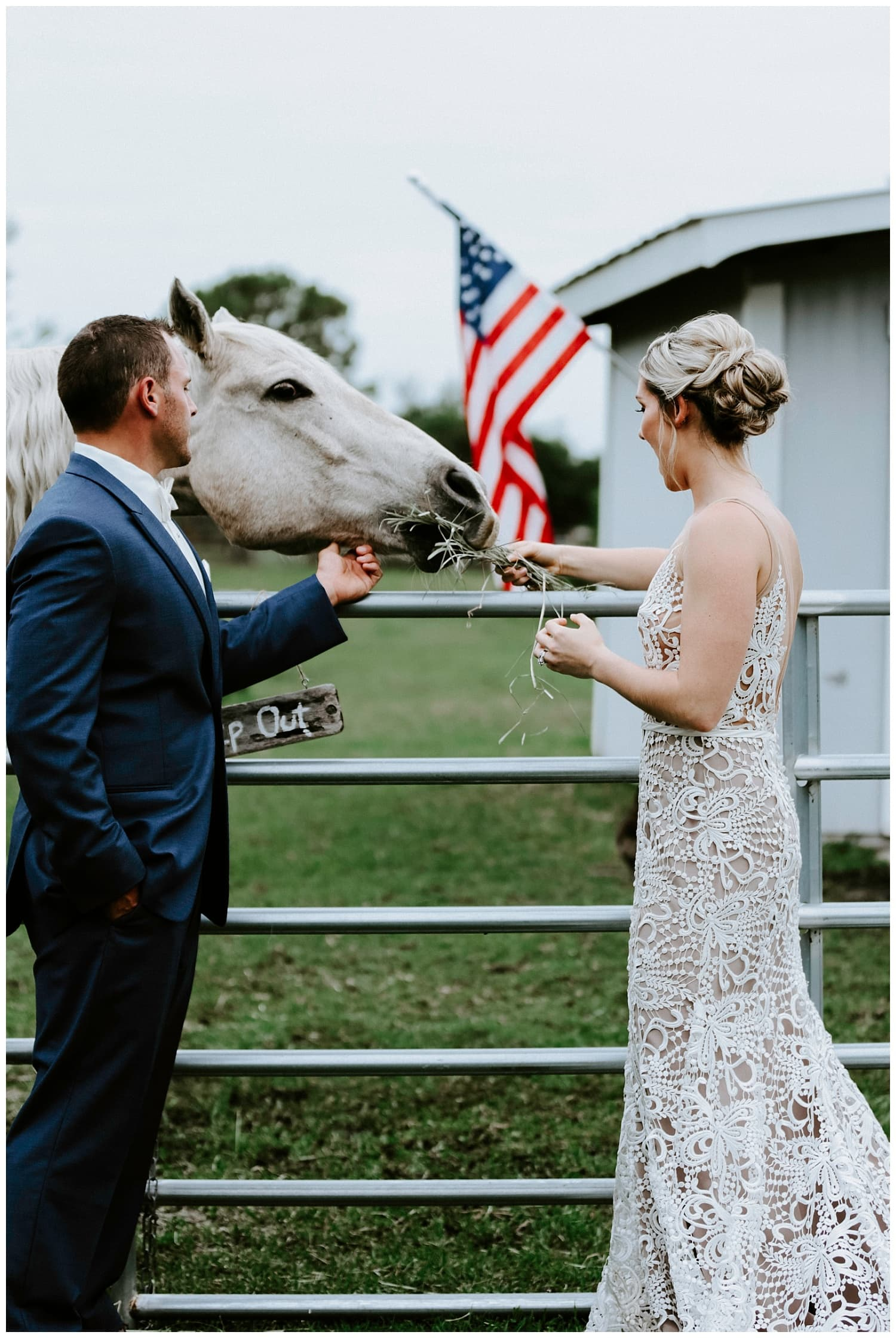 feeding horse at wedding