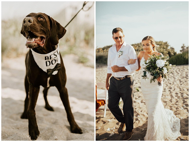 best dog at wedding